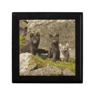 Vixen with kits outside their den small square gift box