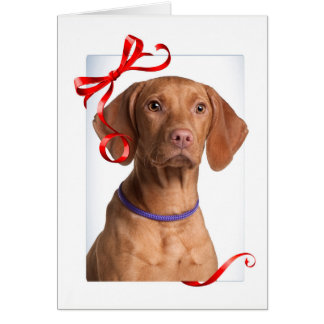 Vizsla Christmas Card