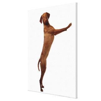 Vizsla Dog Canvas Print