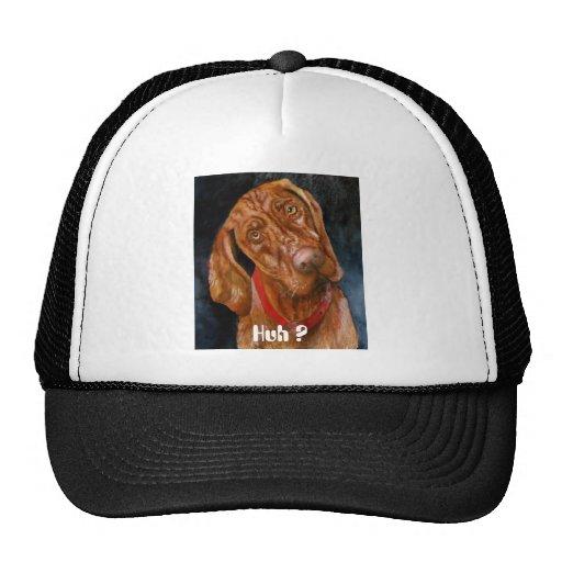 Vizsla, Huh ? Hat