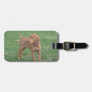 Vizsla Puppy Luggage Tag