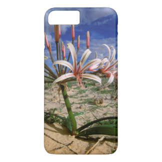 Vlei Lily (Nerine Laticoma) In Flower iPhone 7 Plus Case