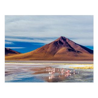 Volcano and Flamingoes Postcard