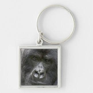 Volcanoes NP, Rwanda, Mountain Gorillas, Key Chain
