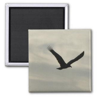 Vulture. Magnet