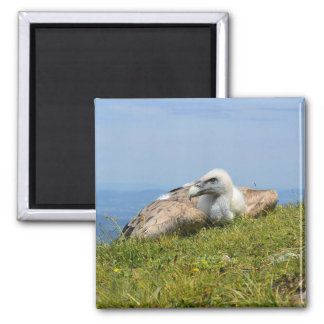 Vulture on the Mountain Magnet