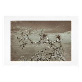 Vultures at Top of Leaveless Tree Photo Art
