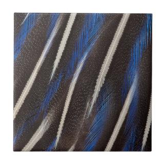 Vulturine Guineafowl feather Ceramic Tile