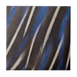 Vulturine Guineafowl feather Small Square Tile