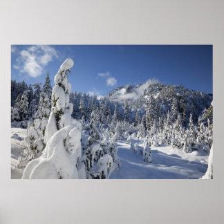 WA, Alpine Lakes Wilderness, Snow Lake basin Poster