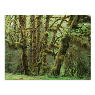 WA, Olympic NP, Hoh Rain Forest, Hall of Postcard