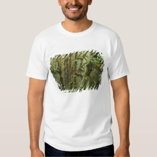 WA, Olympic NP, Hoh Rain Forest, Hall of T Shirt
