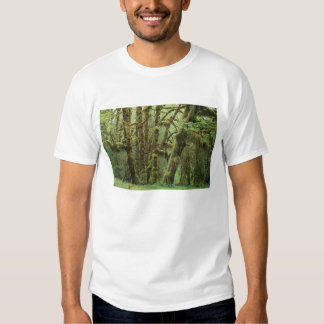 WA, Olympic NP, Hoh Rain Forest, Hall of T-shirt