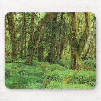 WA, Olympic NP, Quinault Rain Forest, moss Mouse Pad