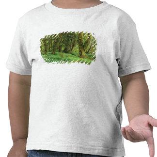 WA, Olympic NP, Quinault Rain Forest, moss T Shirts