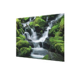 WA, Olympic NP, Sol Duc Valley, stream with Gallery Wrapped Canvas