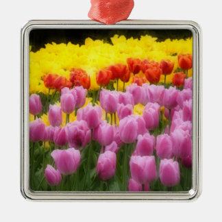 WA, Skagit Valley, Roozengaarde Tulip Garden, 2 Silver-Colored Square Decoration