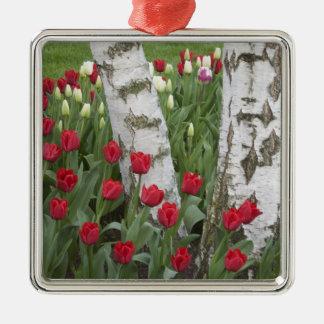 WA, Skagit Valley, Roozengaarde Tulip Garden Silver-Colored Square Decoration