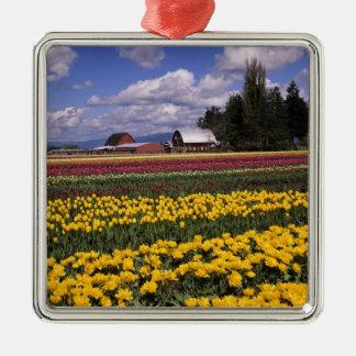 WA, Skagit Valley, Skagit Valley Tulip Silver-Colored Square Decoration