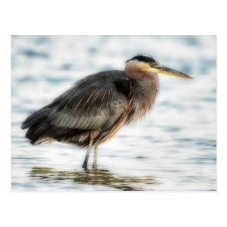 Wading Blue Heron Postcard