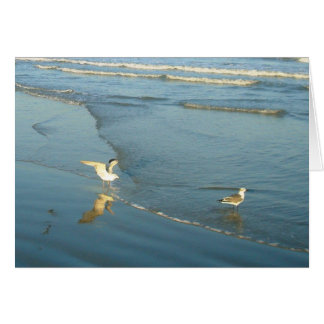 Wading Gulls Blank Note Cards