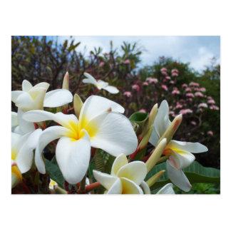 Waikoloa Plumerias Postcard 1