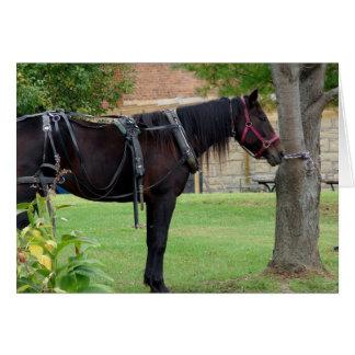 Waiting Amish Horse Greeting Card