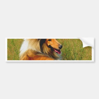 waiting for you rough collie bumper sticker