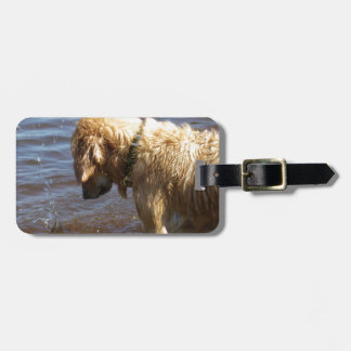 Waiting Golden Luggage Tag
