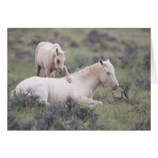 Wake Up Brother Wild Horse Greeting Card