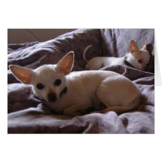 Wake Up Chihuahua Note Card