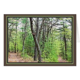 Walden Pond: Sauntering thru the woods Card