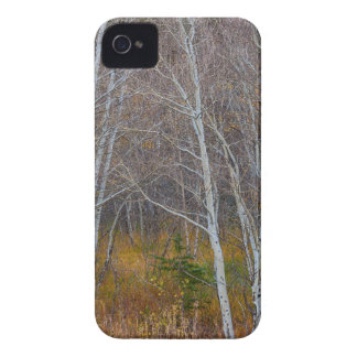 Walk In The Woods Case-Mate iPhone 4 Cases
