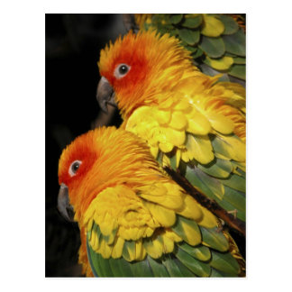 Walk on the Wild Side - Pair of Parrots Postcard