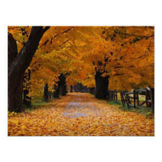 Walking Down Autumn s Memory Lane Posters