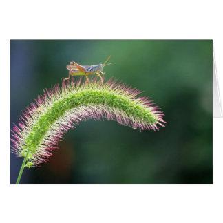 Walking on Air - Grasshopper - color Card