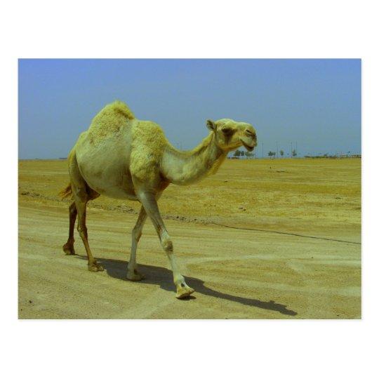 Walking the long road - Camel on Failaka Island Postcard