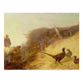 Walking up Pheasants on the 1st of October (see al Postcard