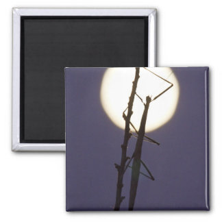 walkingstick and full moon in south Texas, USA Square Magnet