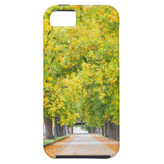 Walkway full of trees case for the iPhone 5