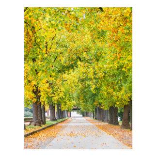 Walkway full of trees postcard