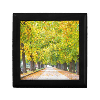 Walkway full of trees small square gift box