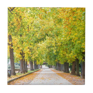 Walkway full of trees small square tile