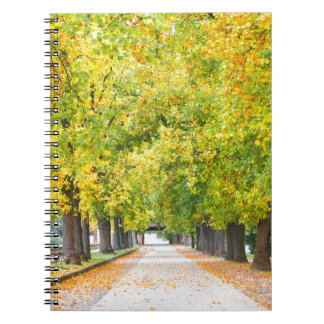 Walkway full of trees spiral note books