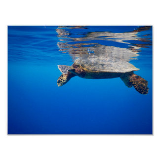 Wall Art: Wildlife and Nature Photo; Sea Turtle Poster