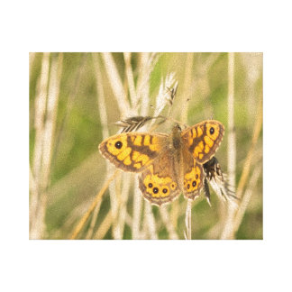 Wall Brown Butterfly Gallery Wrap Canvas