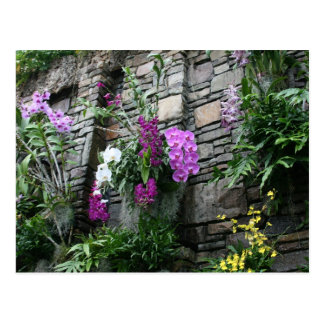 Wall of Orchids Postcard