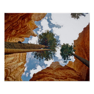 Wall Street Trees, Bruce Canyon Poster