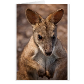 Wallaby greetings card (blank)