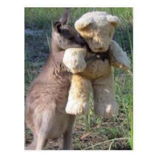 Wallaby hugging teddybear postcard